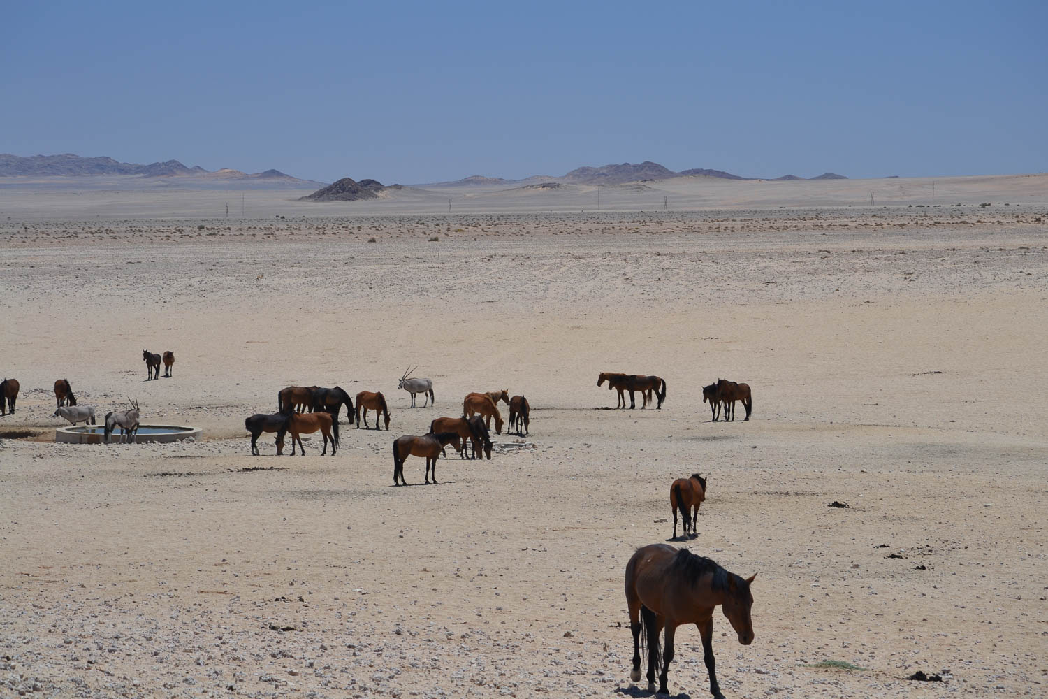Overland 4x4 tours of Namibia