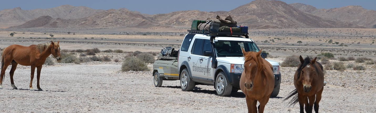 Wild Namibian Horses in Kakaoland with South Africa Overland 4x4 Tours
