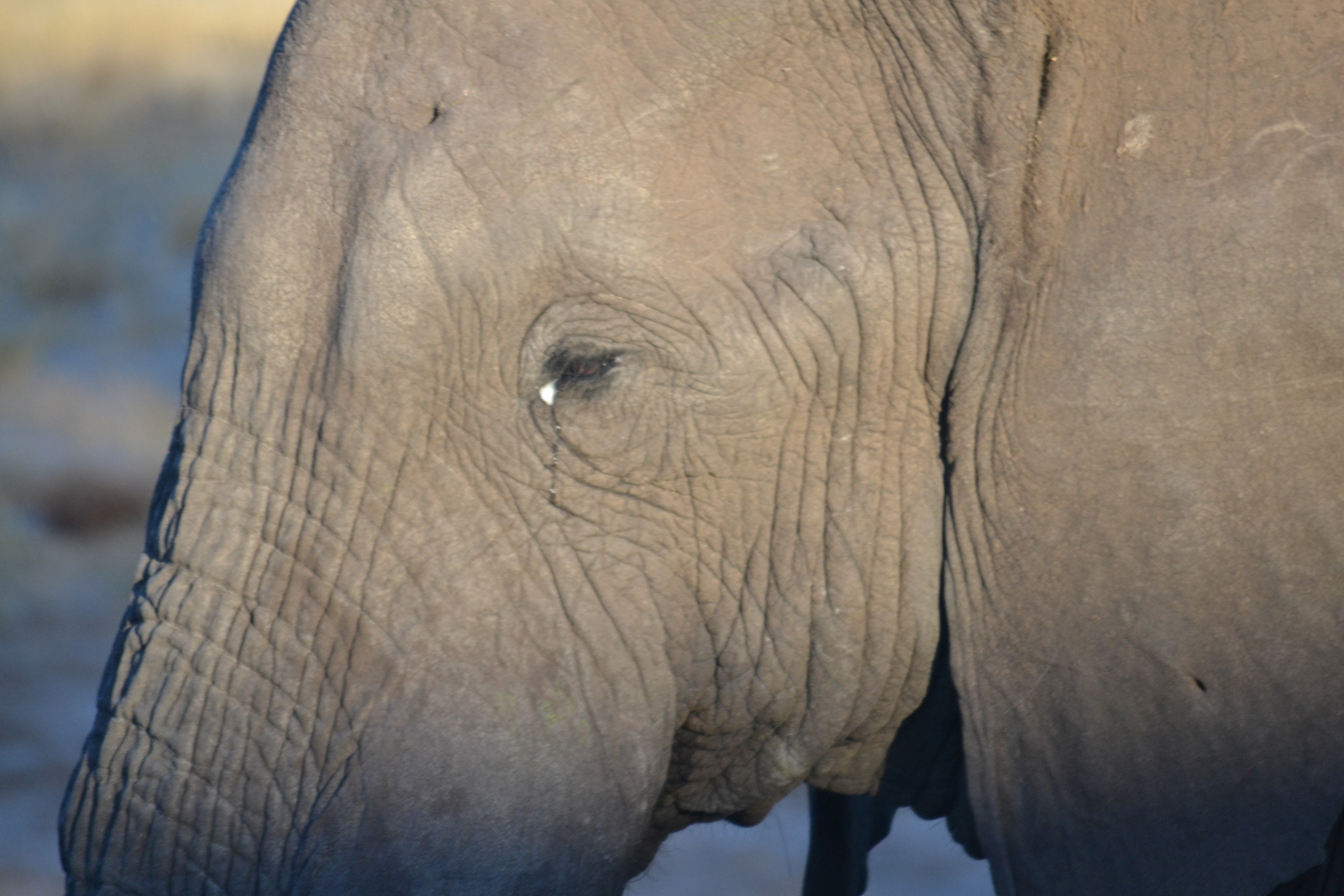 Up close and personal with a beautiful elephant with South Africa Overland 4x4 Adventure Tours
