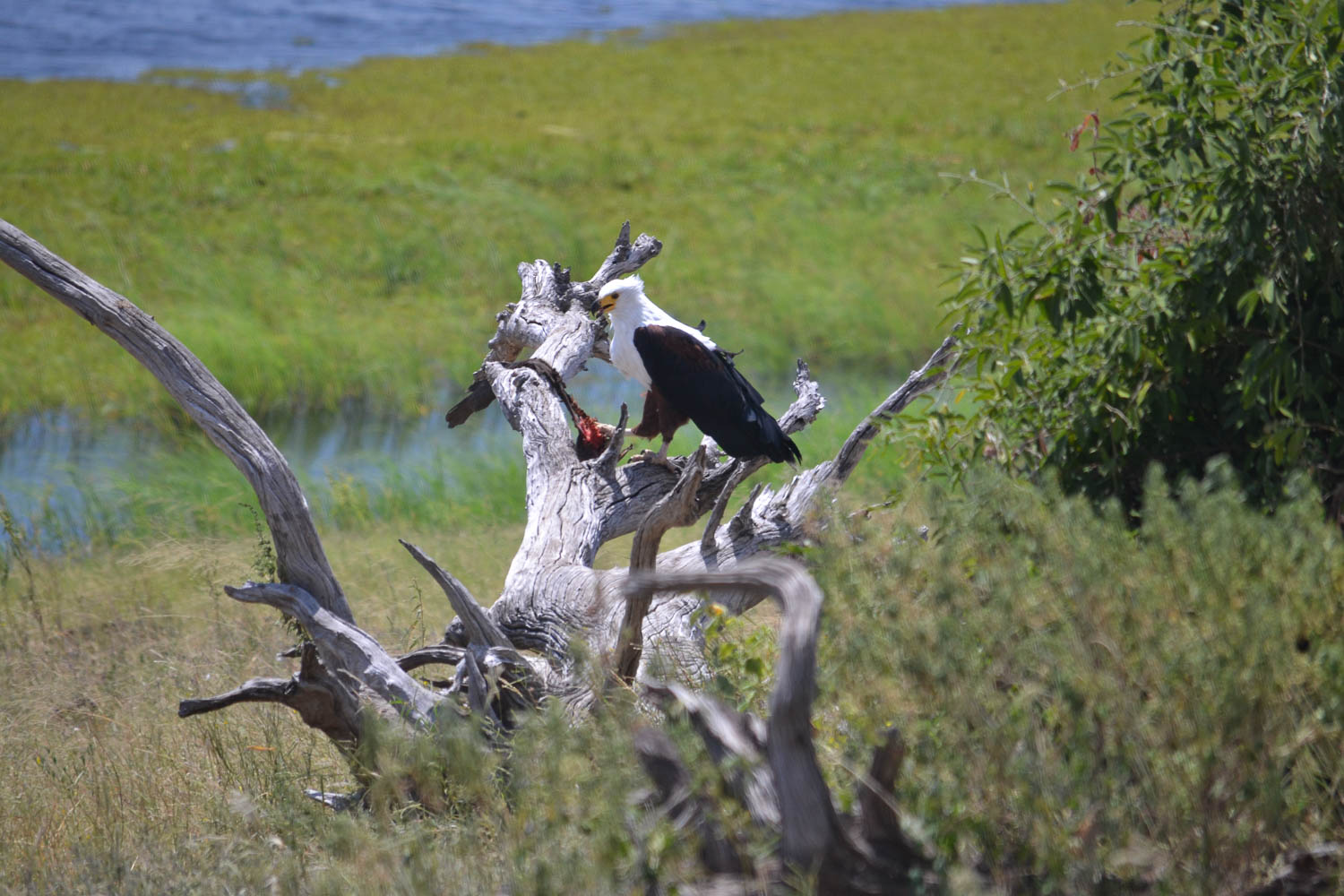 Kafue National Park, Zambia with South Africa Overland 4x4 Tours