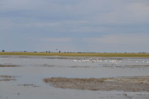 Birdwatching, flamingos in Botswana with South Africa Overland 4x4 Tours