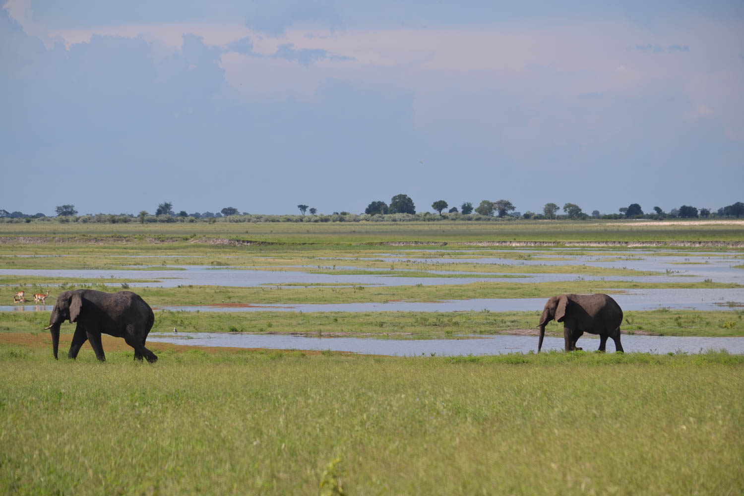 Elephants in Botswana with South Africa Overland 4x4 Tours