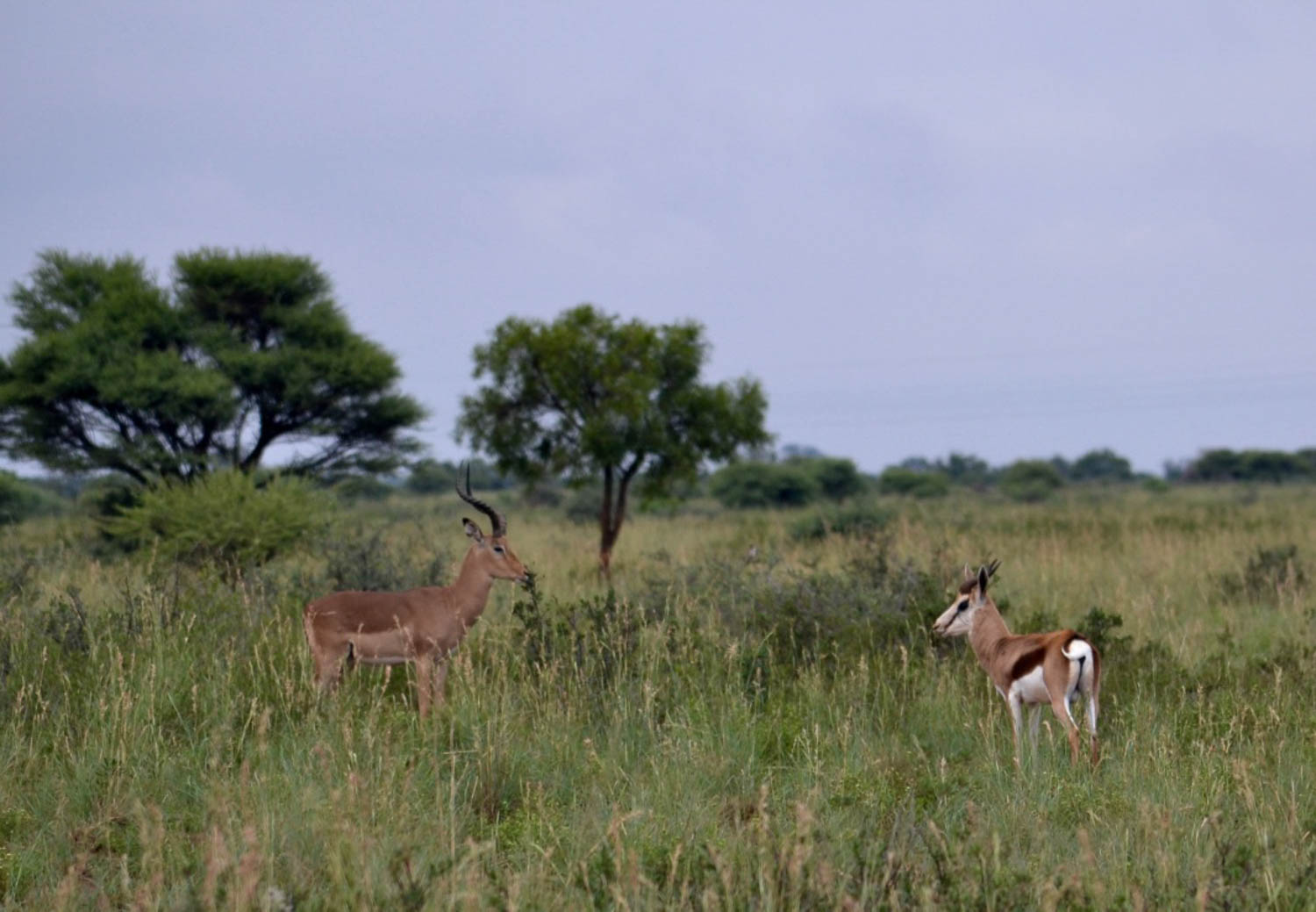 Many species of antelope with South Africa Overland 4x4 Tours