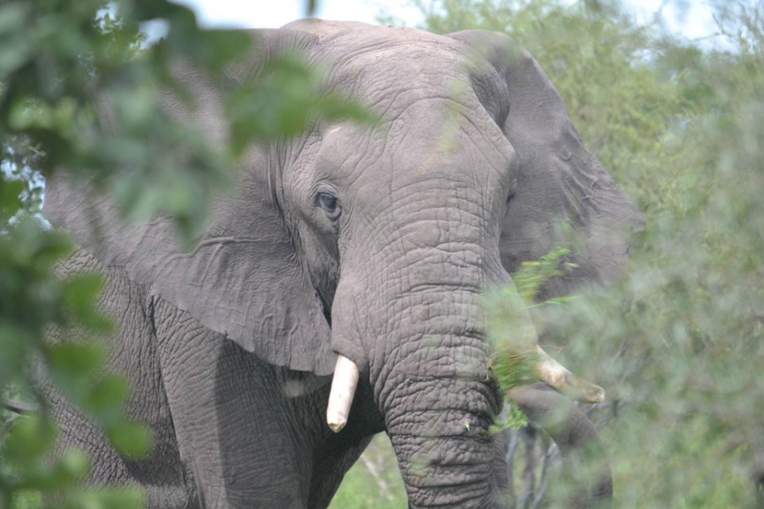 Elephants in Zimbabwe with South Africa Overland 4x4 Tours