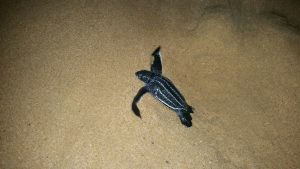 Southern African Overland 4x4 Tours Kosi Bay Turtle Tour