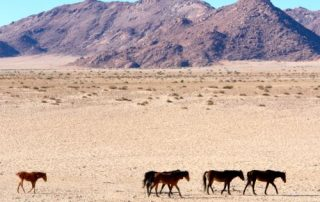 Wild Namibian Horses and Gemsbok in Kakaoland with South Africa Overland 4x4 Tours