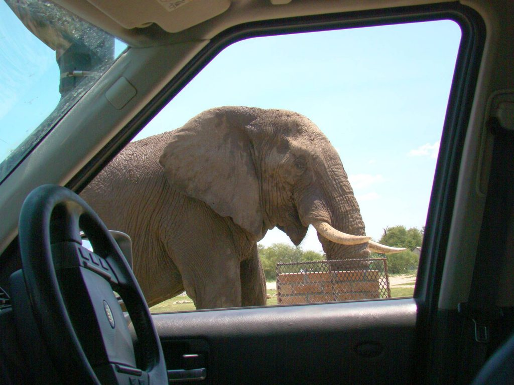 Getting up close with Elephants, Botswana; with African Overland 4x4 Tours